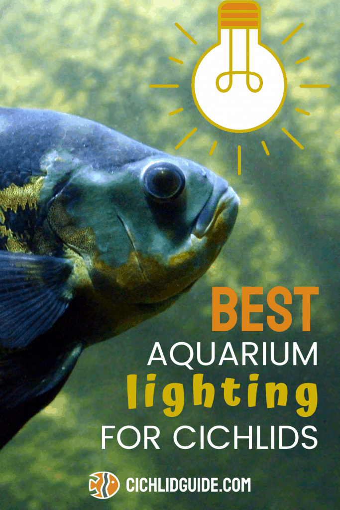 Best Aquarium Lighting for Cichlids - CichlidGuide.com - Really great lighting options for cichlid aquariums in this post.