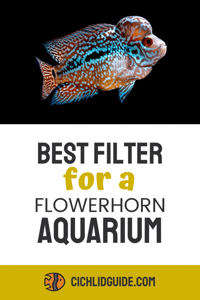 Best Filter for a Flowerhorn - CichlidGuide.com - Do you have a flowerhorn tank or want to start one? Check out some of the best filters in this post.