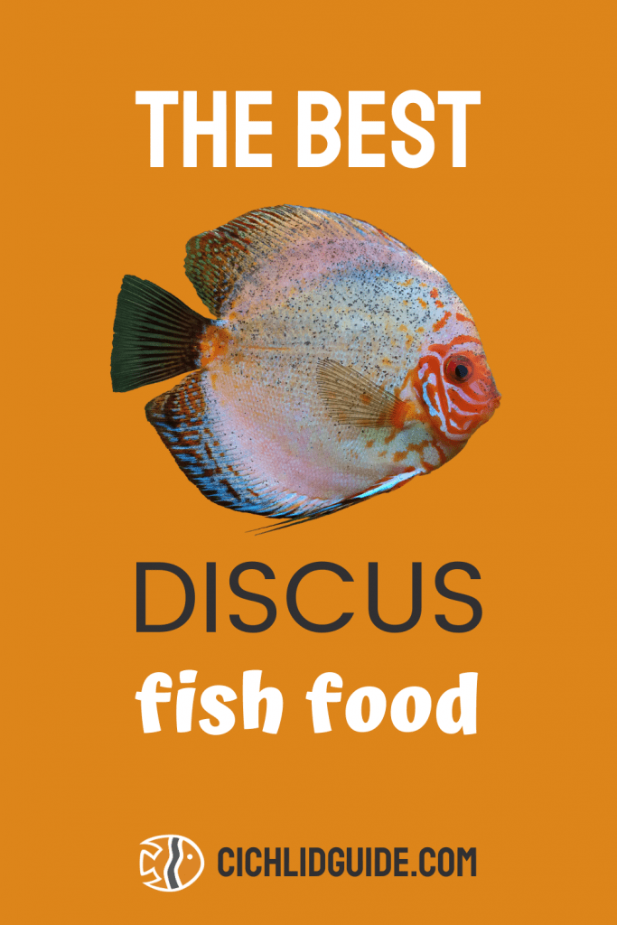 The Best Discus Fish Food - CichlidGuide.com - Want to know what your discus fish should be eating? Check this list of discus foods to find the best one for your pet.